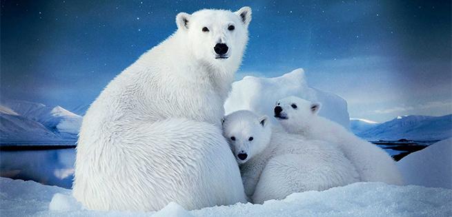 PolarBears3D.jpg