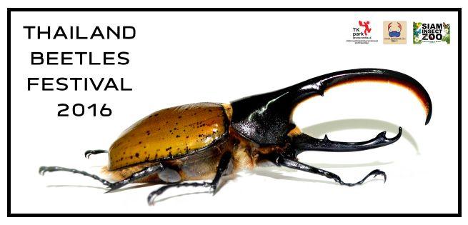 Beetles_655x315px.jpg