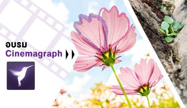 cinemagraph_600x347px.jpg