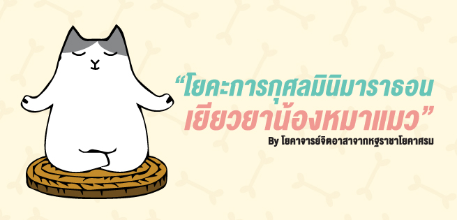 YogaCat-655x315.jpg